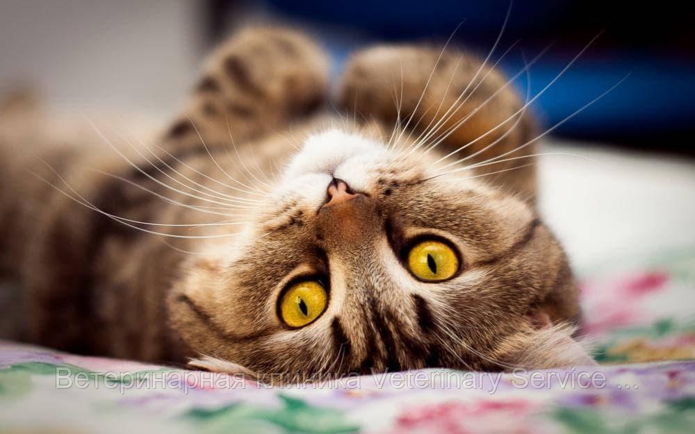 Мастэктомия (1 пакет молочый.пакет): кошка