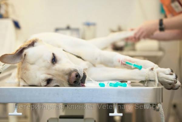 Мастэктомия (1 пакет молочый.пакет): собака от 15 до 30 кг