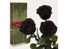 Три долгосвежие розы Черный Бриллиант в подарочной упаковке