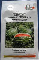 АРБУЗ ДУМАРА DYMARA F1 500 СЕМЯН, фото 1