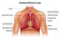 Десять неочевидних сигналів про те,  що з нашими легенями не все гаразд