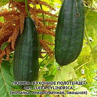 ЛЮФФА «КУХОННОЕ ПОЛОТЕНЦЕ»