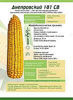 Семена кукурузы Днепровський 181СВ