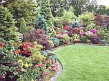 Багаторічні квіти і трави для саду