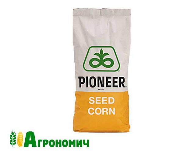 Насіння кукурудзи Піонер П8523 / P8523 Форс ЗЕА, имп.  AQUAmax (ФАО 260)