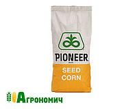 Насіння кукурудзи гібрид П0216 | P0216 (ФАО 480) AQUAmaх, фото 1