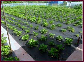 Агроволокно «Agreen» для мульчирования (1.6х100 м) рулон, оригинал, фото 3