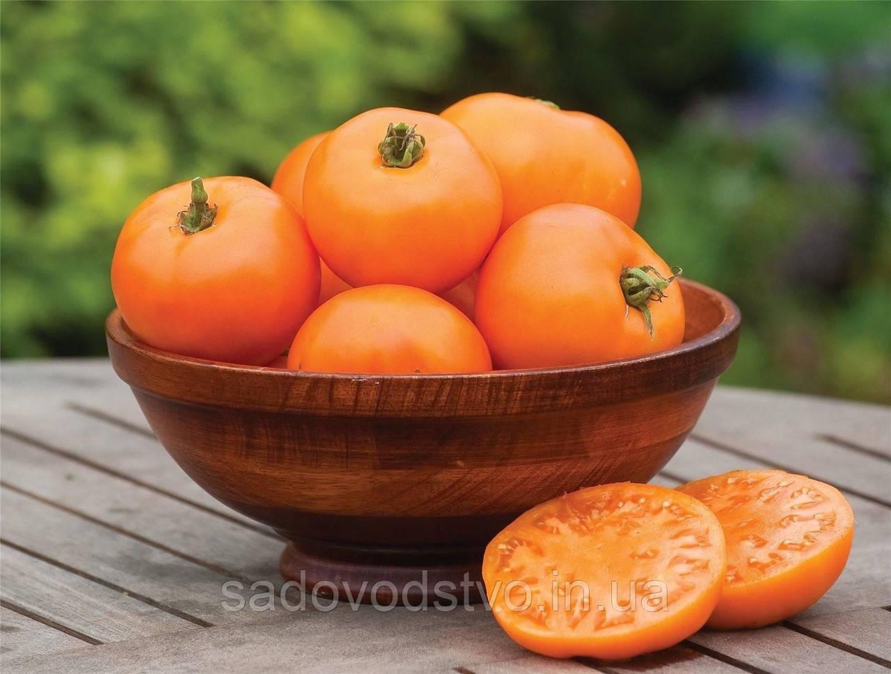 Томат Апельсиновый Веллингтон