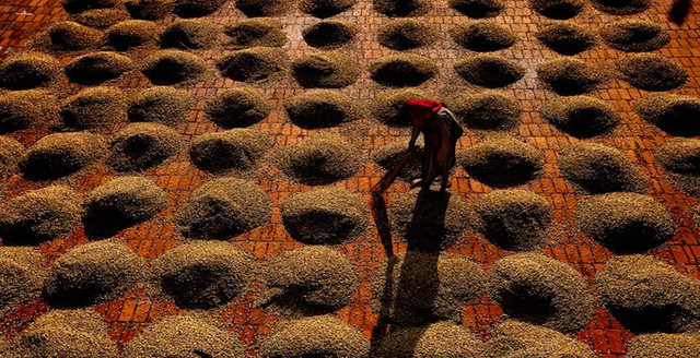 сырой кофе арабика индия мусонный малабар