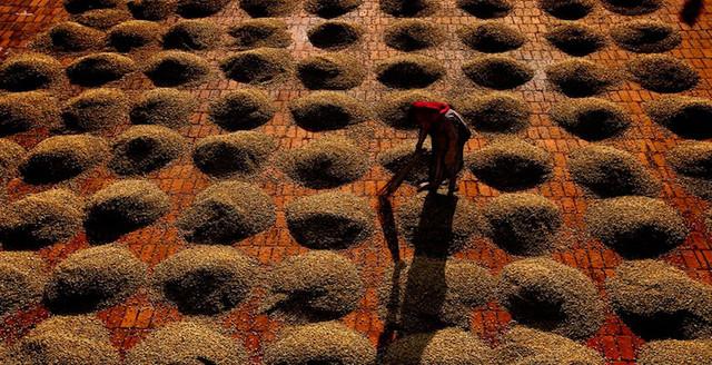 необжаренный кофе арабика индия мусонный малабар