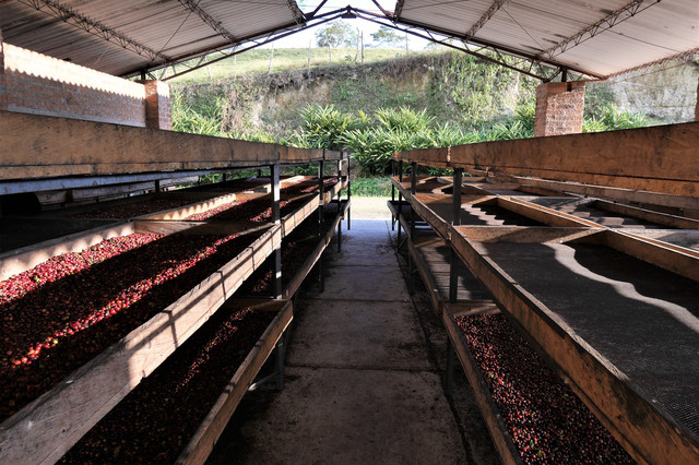 мытая обработка кофе Колумбия Эксельсо, купить Колумбийскую Арабику в Украине с доставкой