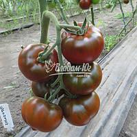 БРОНЗОН F1 (CLX 37869) 1000 с / BRONZON F1 (CLX 37869) 250с – томат  Clause / Клоз