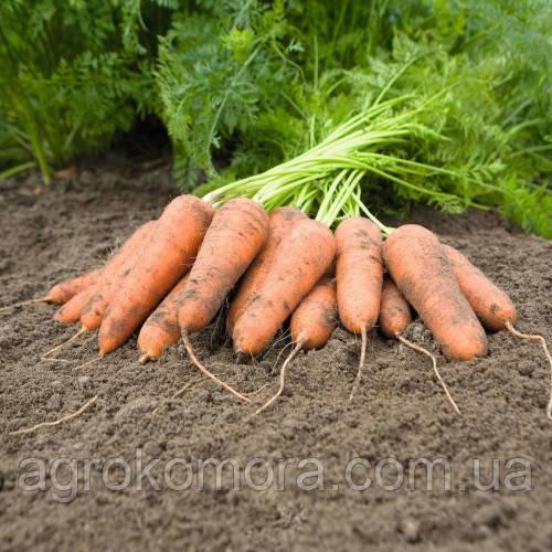 Каріні морква 500 г Bejo