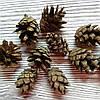 Шишки сосновые натуральные mini 10штук