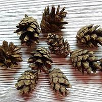 Шишки сосновые натуральные mini 10штук, фото 1