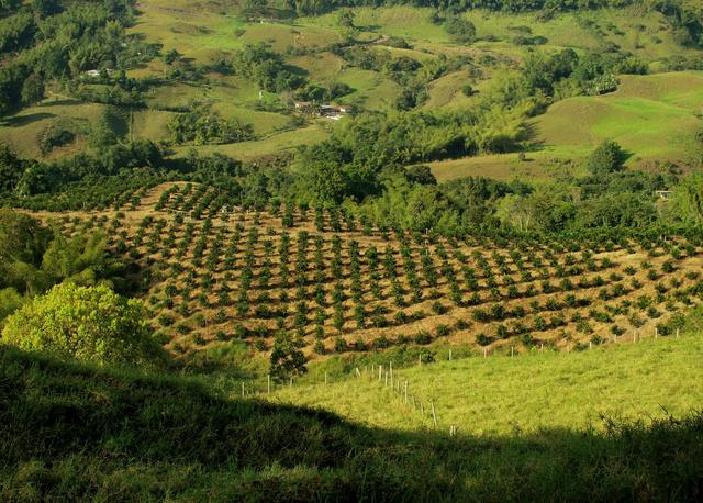 необжаренный кофе арабика эквадор галапагос