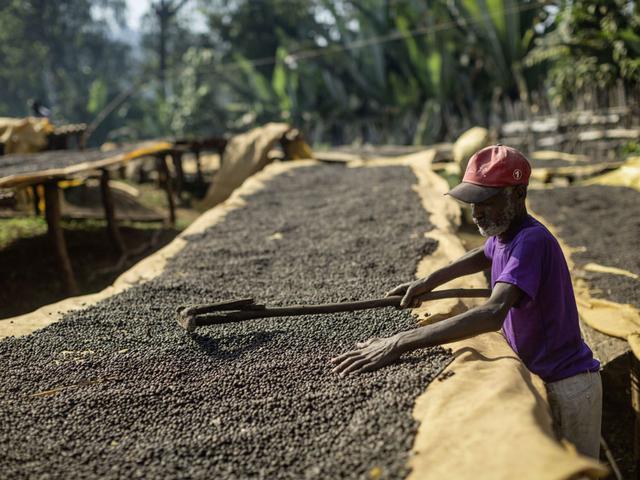 необжаренный кофе арабика эфиопия ефиопия джимма