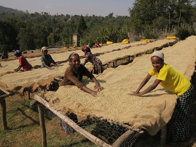 необжаренный кофе арабика эфиопия ефиопия сидамо
