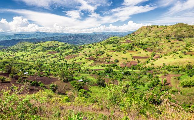 зеленый кофе арабика ефиопия эфиопия лиму