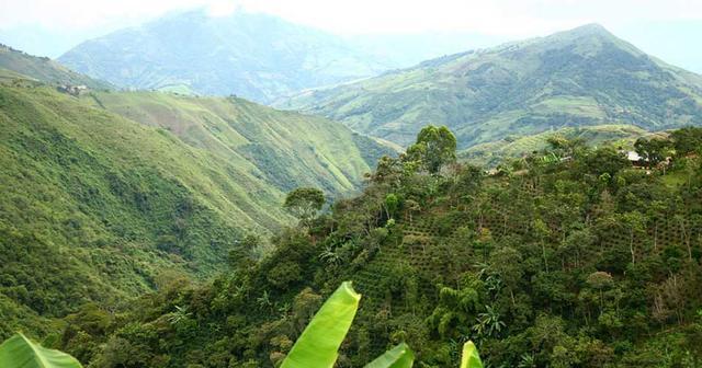 зеленый кофе арабика колумбия марагоджип