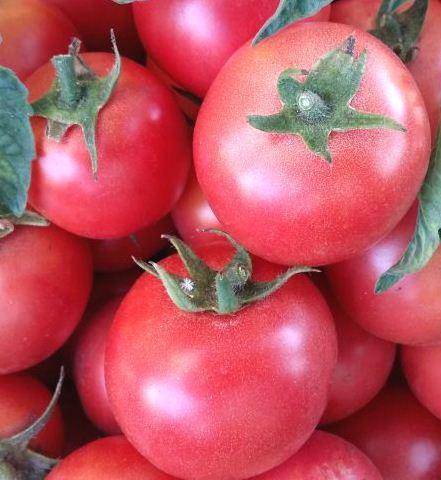 Семена томатов Ляна розовая