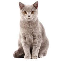 Для всіх порід кішок