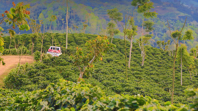 зеленый кофе арабика никарагуа марагоджип