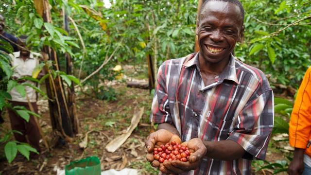 зеленый кофе робуста уганда