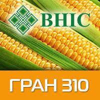 Кукуруза гибрид Гран 310 (ФАО 250)