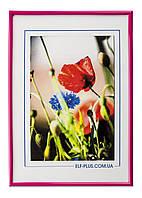 Рамка а4 из пластика - Розовый яркий - со стеклом, фото 1