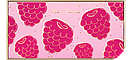 Тени Too Faced Tutti Frutt Dazzle Berry, фото 4
