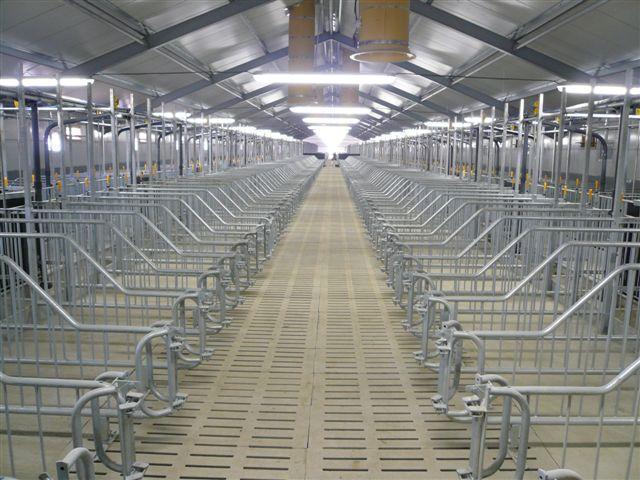Будівництво свиноферм під ключ і постачанням обладнання
