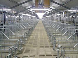 Строительство свиноферм под ключ и поставкой оборудование