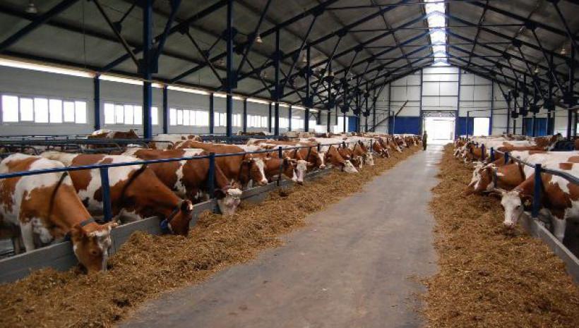 Строительство и модернизация животноводческих комплексов а