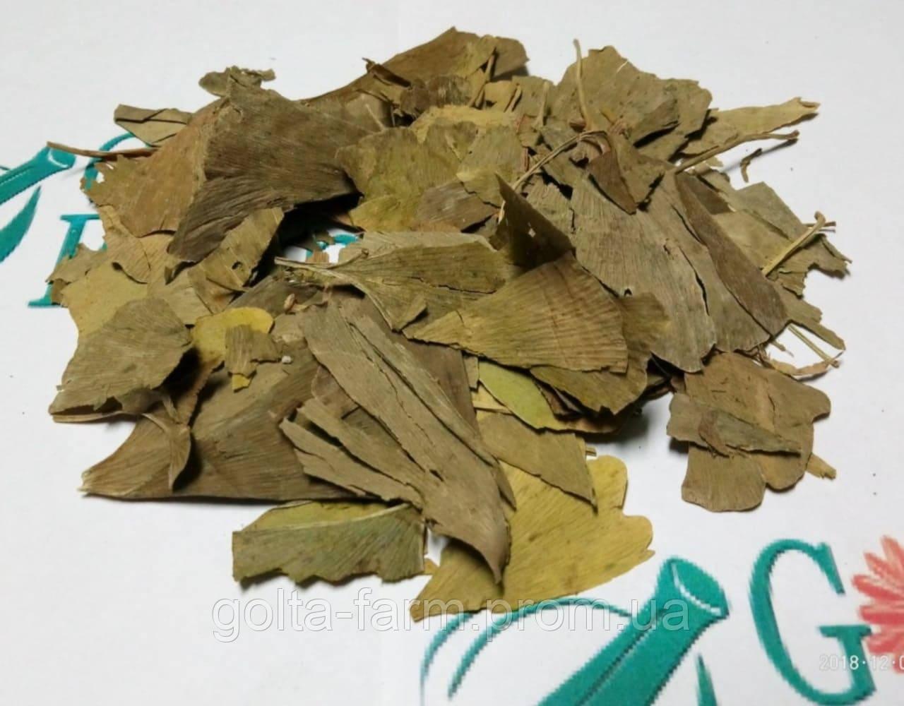 Гинкго Билоба листья.