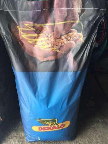 Семена кукурузы ДКС 4351 (Monsanto)