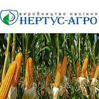 Семена кукурузы НС-400 (Нертус)