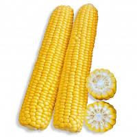 Рання Насолода F1 кукурудза цукрова 25000нас. Lark Seeds
