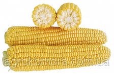 1707 F1 кукурудза цукрова 2500нас. Lark Seeds