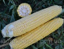 Страйк (1525) F1 кукурудза цукрова 2500нас. Lark Seeds