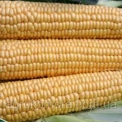 Світ Наггет F1 кукурудза цукрова 5000нас. Agri Saaten