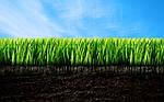 Рекомендации по созданию газона