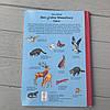 Красочный набор книг Мой большой Виммельбух в коробке, 3 шт, Анна Сьюз, фото 6