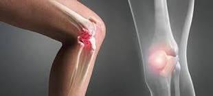 Костно-мышечная система (опорно-двигательная система)