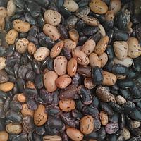 Фасоль цветные бобы