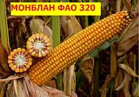 Семена кукурузы  Монблан ФАО-320  (фракция - Стандарт)