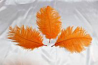 Перо страуса.Цвет Оранжевый.Размер 15-20cм. Цена за 1шт.