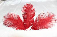 Перо страуса.Цвет Красный.Размер 20-25cм. Цена за 1шт.