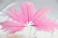 Перо страуса.Цвет Cветло-розовый.Размер 15-20cм. Цена за 1шт.