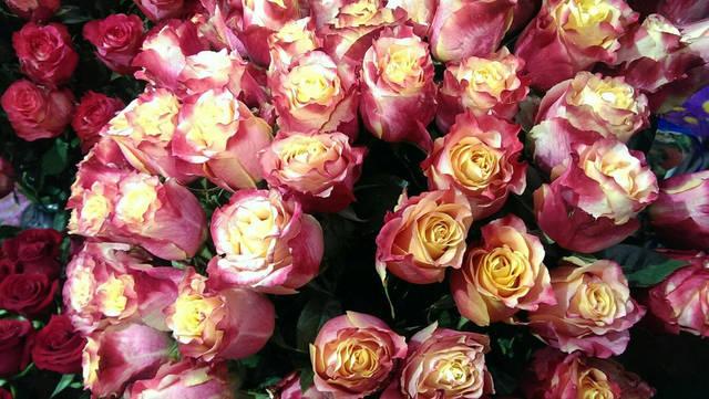Розы Switness